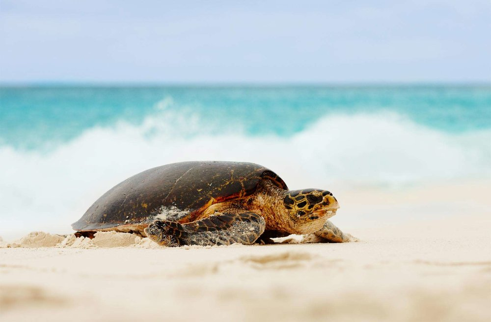 fregate-conservation-turtles1.jpg
