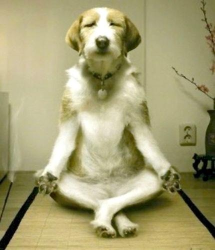 meditation-vanina-chien-padmasana.jpg