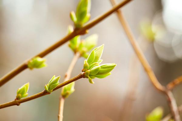 special-printemps.jpg