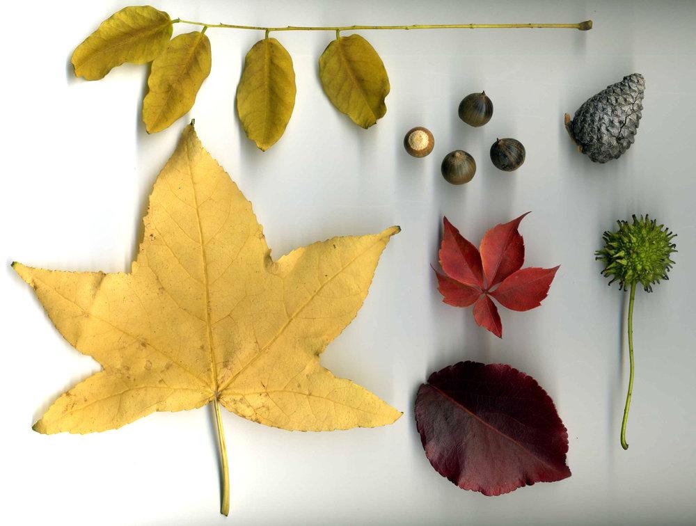 feuillesmortes_1.jpg