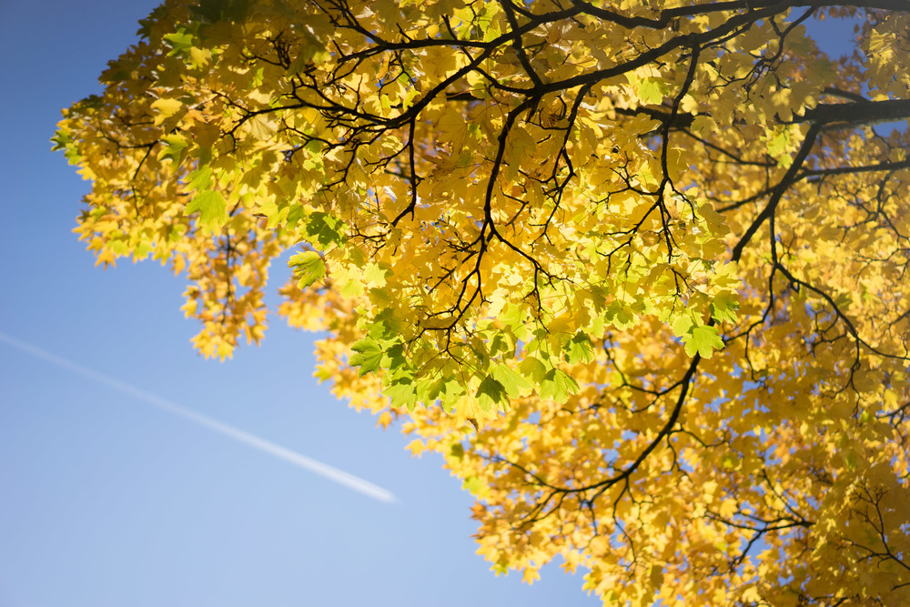 Herfst 2015-00013.jpg