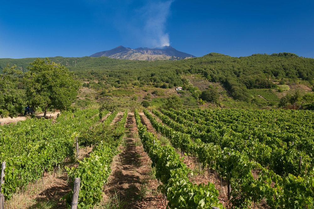 Tenuta Monte Gorna (5).jpg