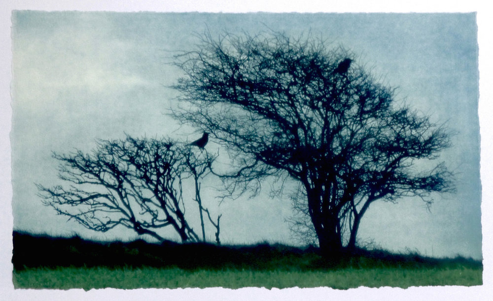 Artist: Luella Martin  Title: Two Crows  Medium: Solar etching on saunders paper  Size: 23 x 39.5 cm  Price: £310 fr, £240 u/f