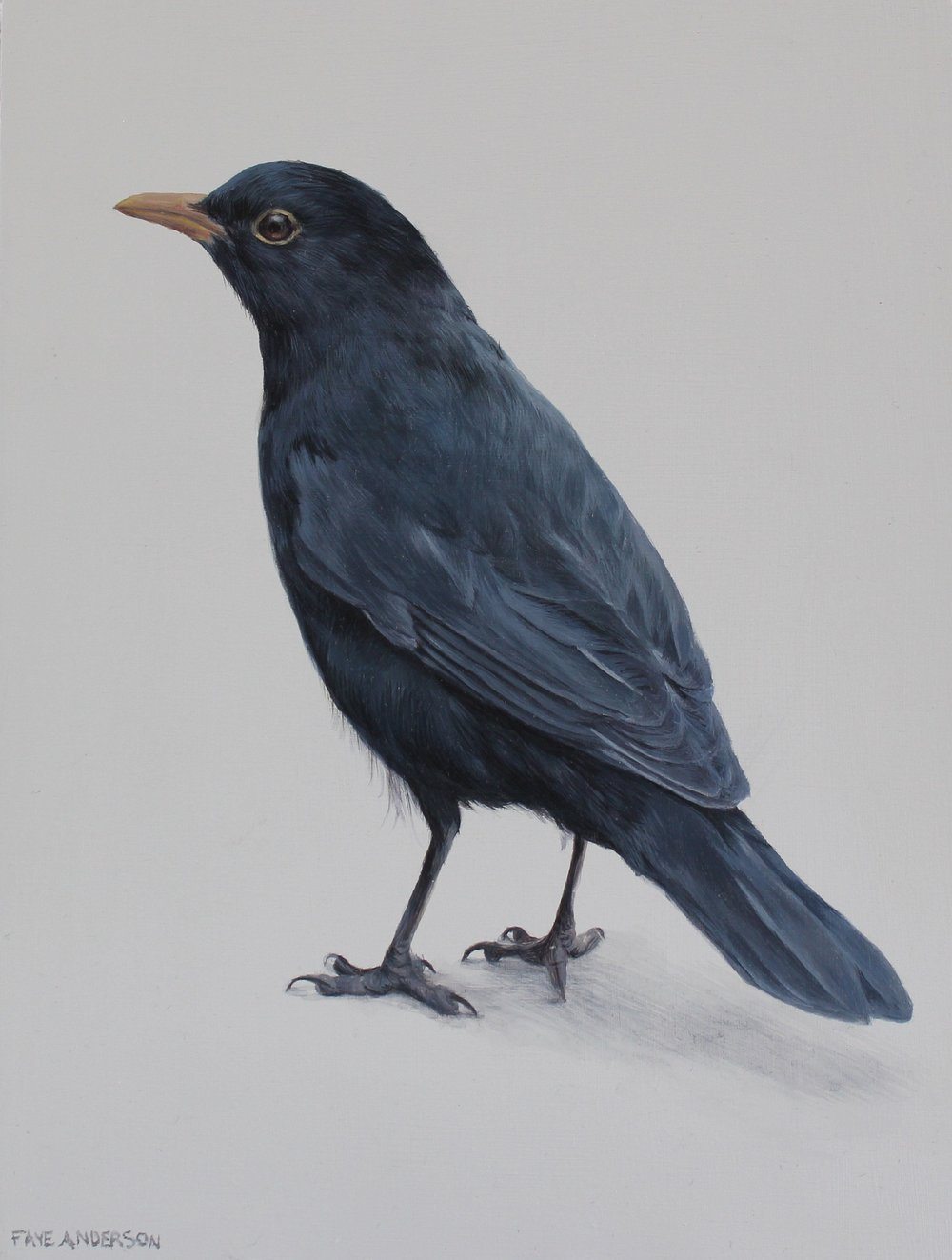 Artist: Faye Anderson  Title: Little Blackbird  Size: 20 x 15 cm  Price: SOLD