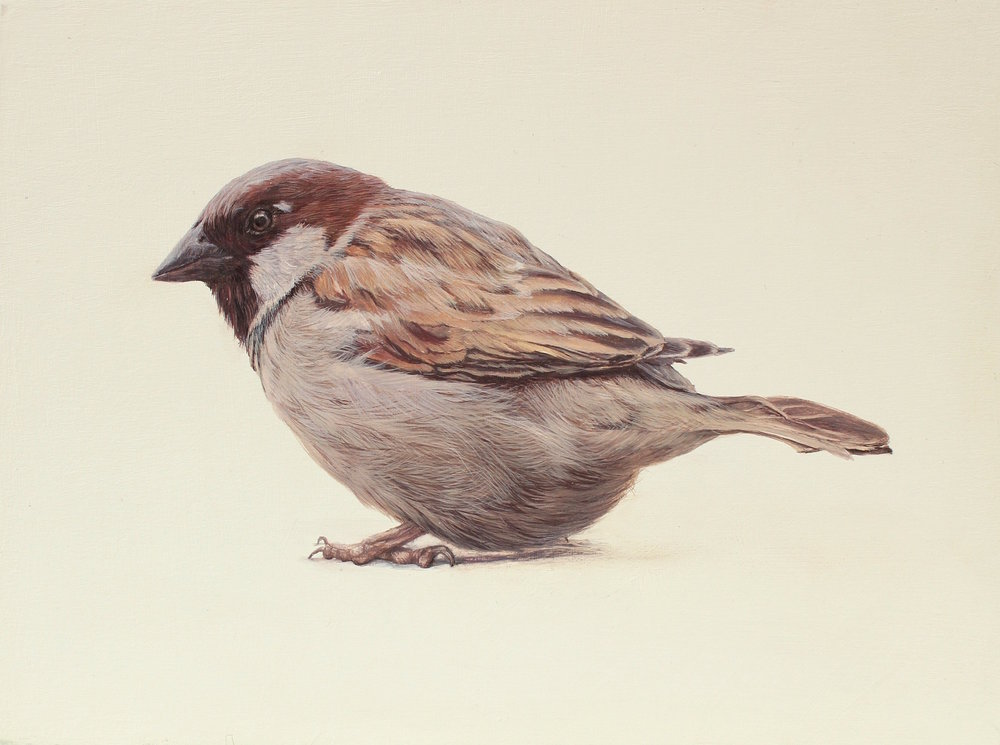 Title: Little Sparrow Size: 15 x 20 cm Medium: Egg Tempera SOLD