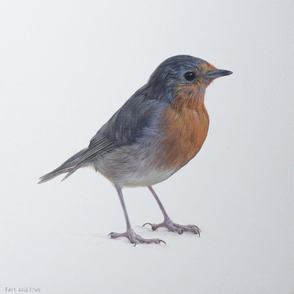 Artist: Faye Anderson  Title: Mid winter Robin  Size: 20 x 20 cm  Medium: Egg Tempera  SOLD