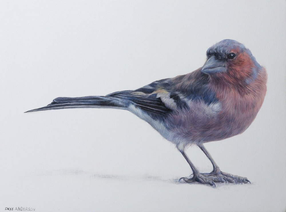 Artist: Faye Anderson  Title: Little Chaffinch  Size: 20 x 15 cm  Medium: Egg Tempera   SOLD