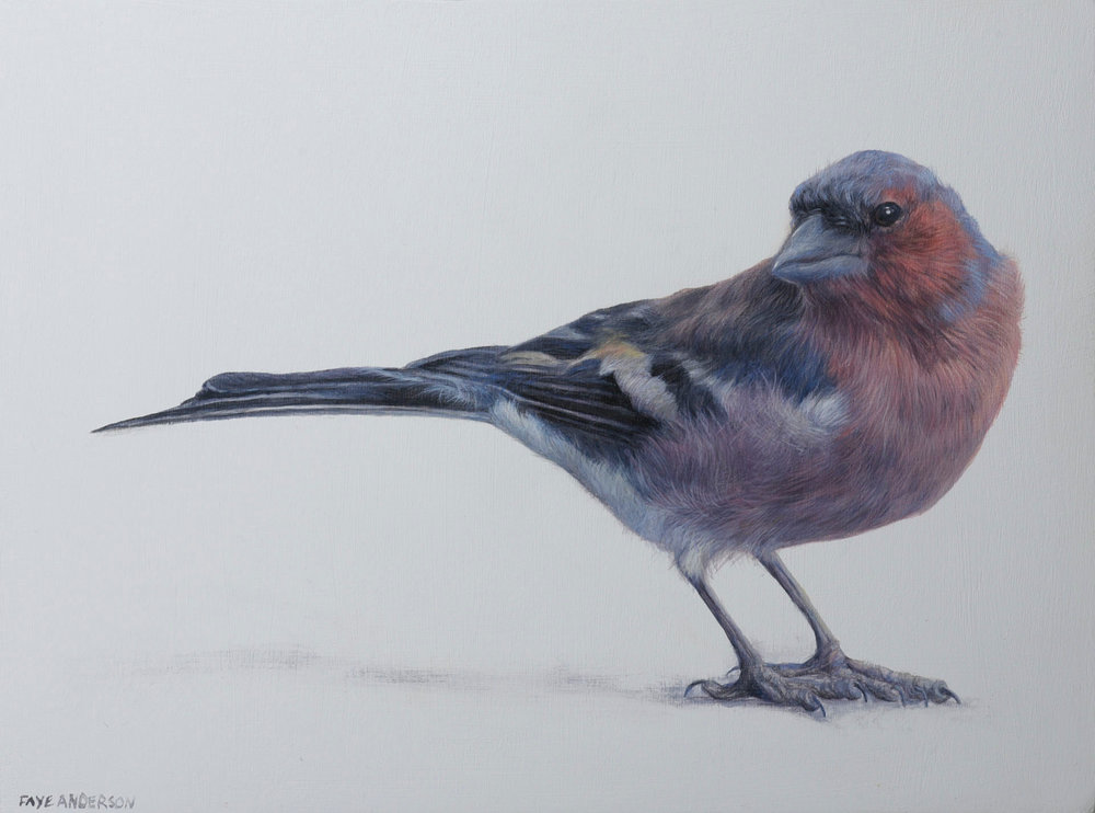 Title: Little Chaffinch  Medium: egg tempera on panel  Size: 15 x 20cm  Price: £825