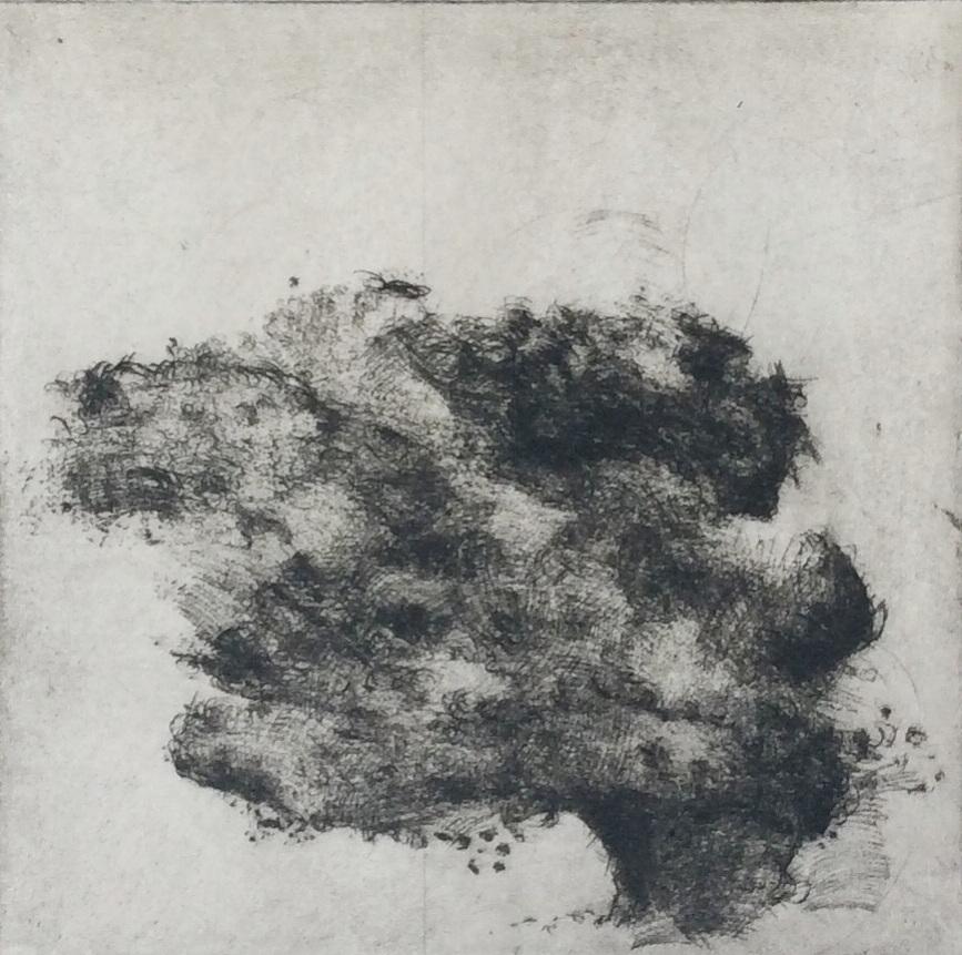 Artist: Linda Felcey  Title: Cumulus Fraxinus  Size: 25 x 25 cm, framed size  Medium: Copper Mezzotint, Ed of 10  Price: £250   Buy Now