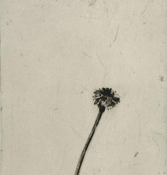Title: Dandelion  Size: 30 x 24 cm  Medium: Drypoint and carborundum  Price: £580 unframed   Buy Now