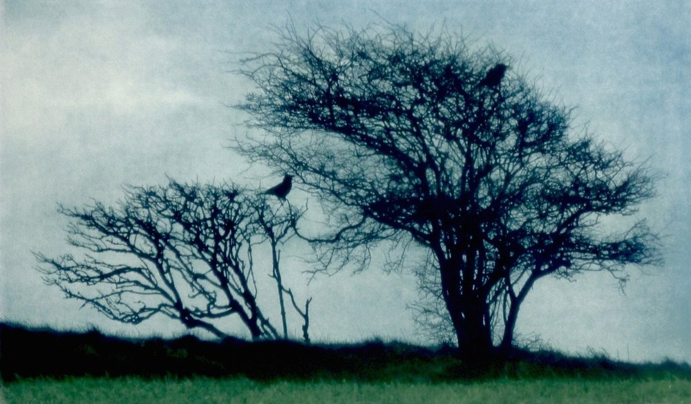 Title: Two Crows  Size: 23 x 39.5 cm  Medium: Solar etching (edition of 30)  Price: £310 fr   Buy Now