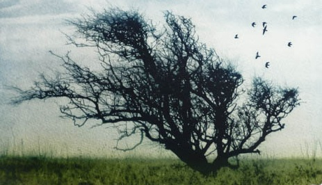 Title: Tangled Tree  Size: 15.5 x 27 cm  Medium: Solar etching (edition of 40)  Price: £180 fr   Buy Now