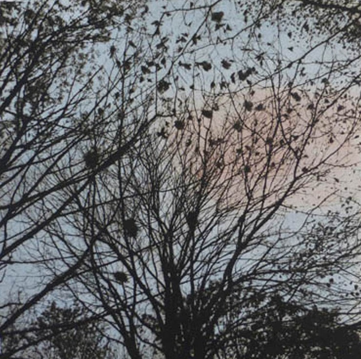Title: Rookery  Size: 29 x 29 cm  Medium: Solar etching (edition of 10)  Price: £275 fr   Buy Now