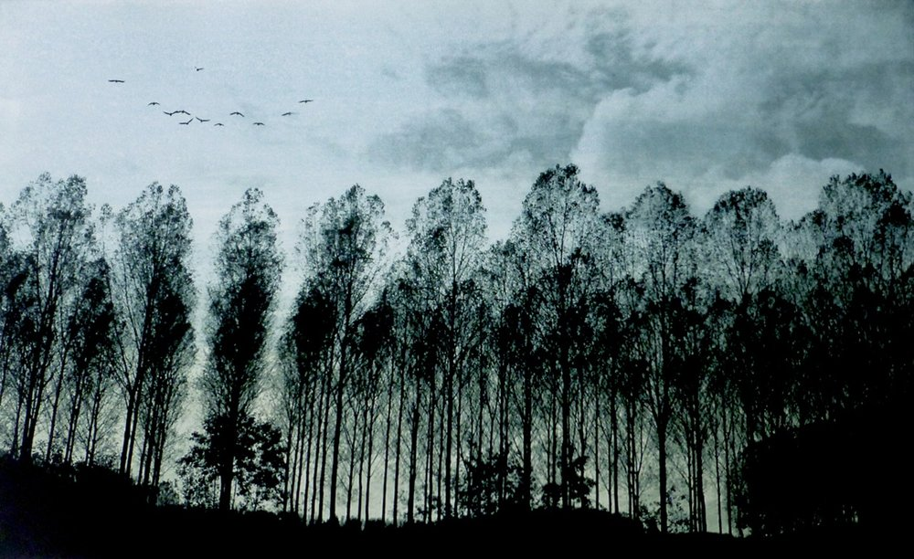 Title: Line of Trees  Size: 24 x 39.5 cm  Medium: Solar etching and oil paint  Price: £300 fr / £240 u/f   Buy Now