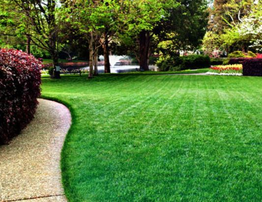 annual chemical and organic turf treatment plans - Lawn Treatment