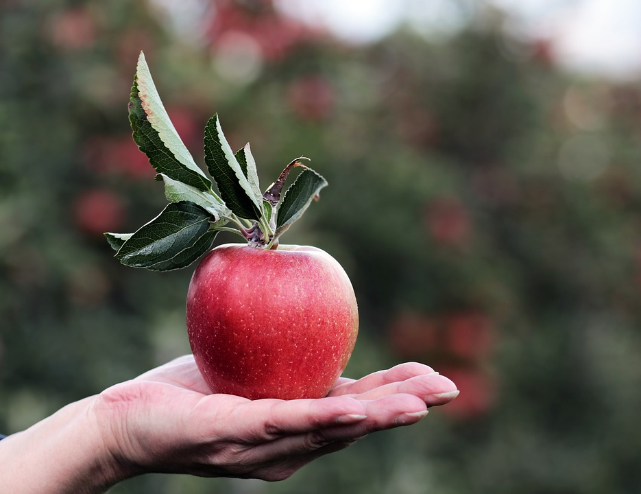 A woman's hand holds an apple in the palm of her hand against the backdrop of an orchard.