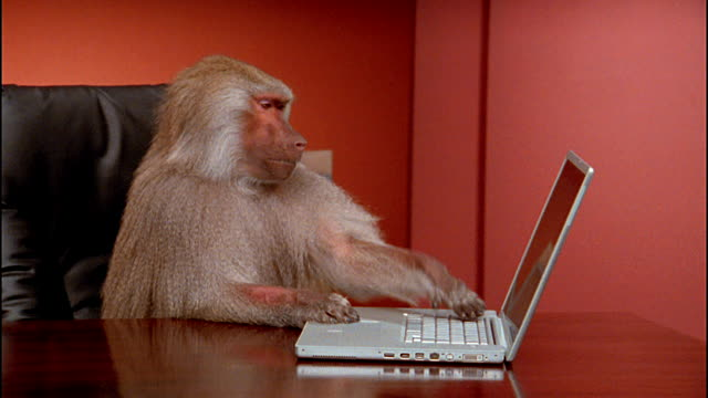 A Monkey Inn editor checking out the layout of a new article.