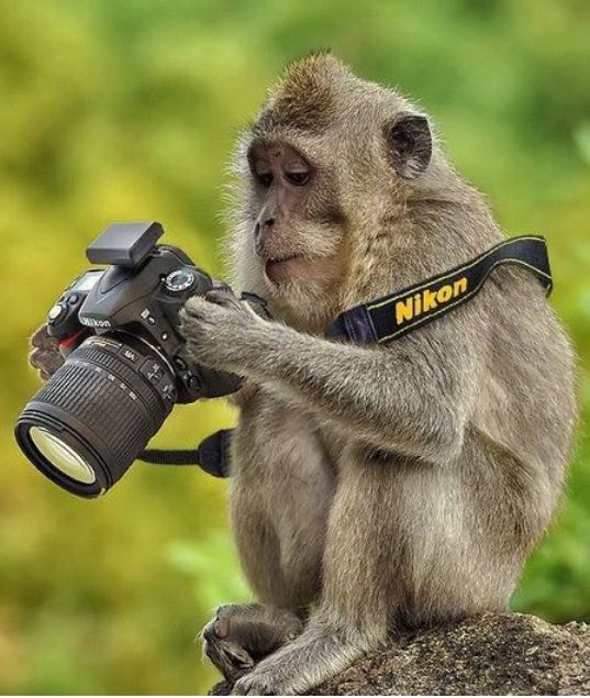 A Monkey Inn journalist checking out his new pictures for an article.