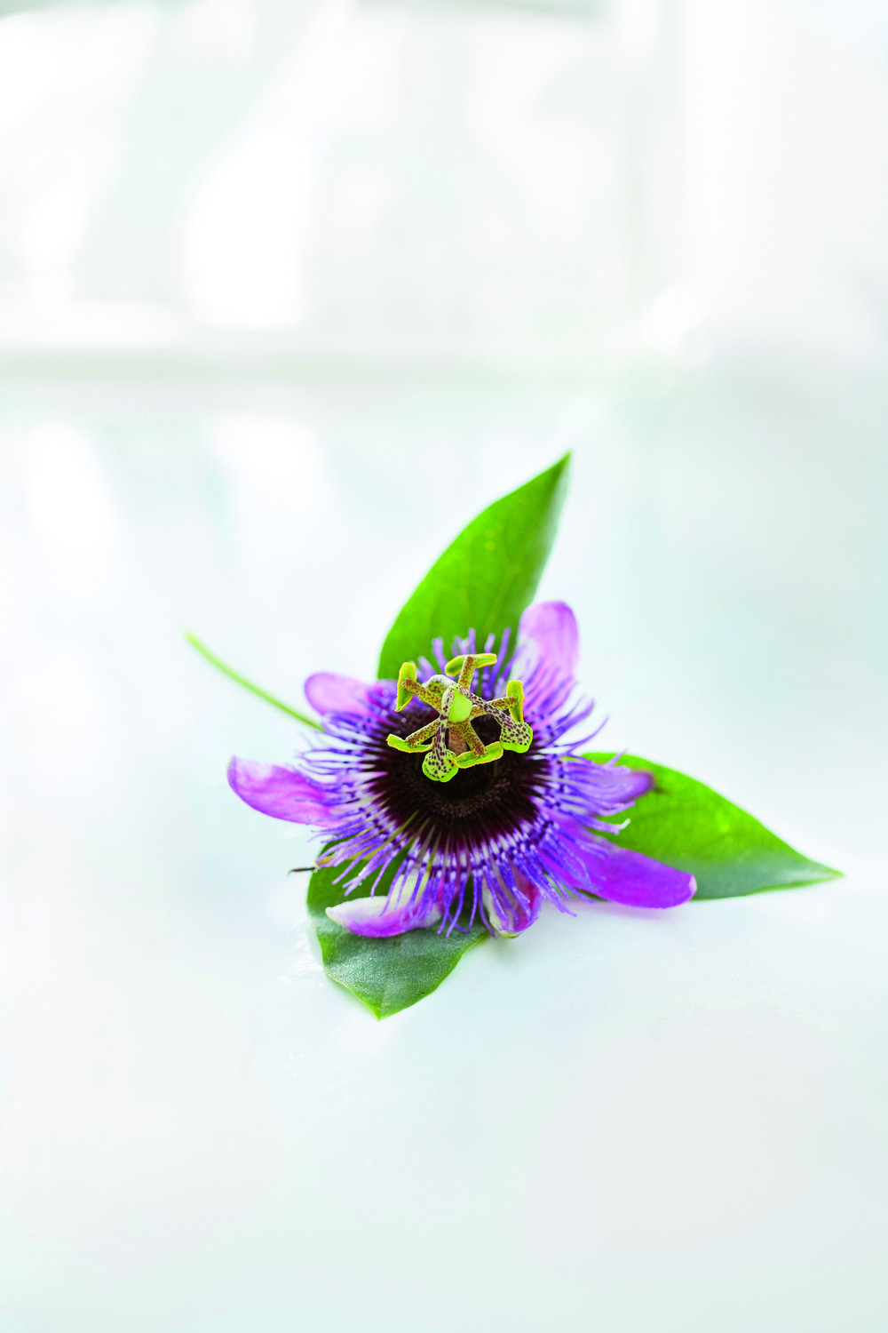 Newsha_passiflora copy.jpg