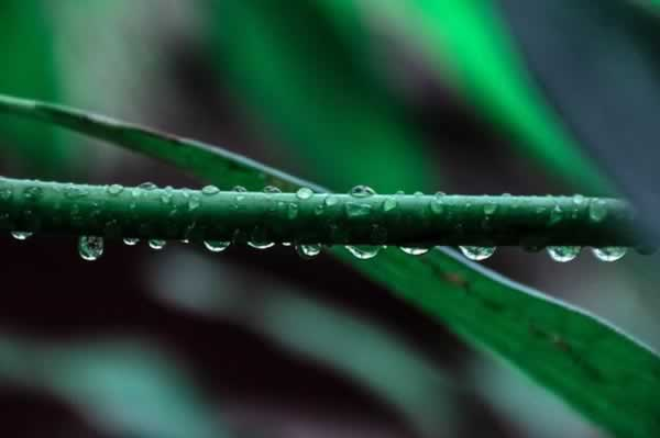 water dripping off of a plant stem