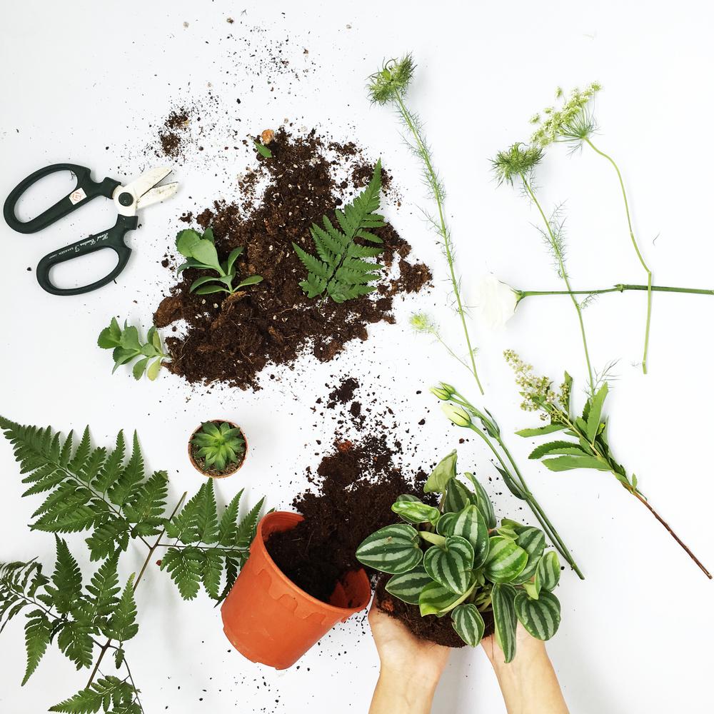 inashea_botanicalarrangement