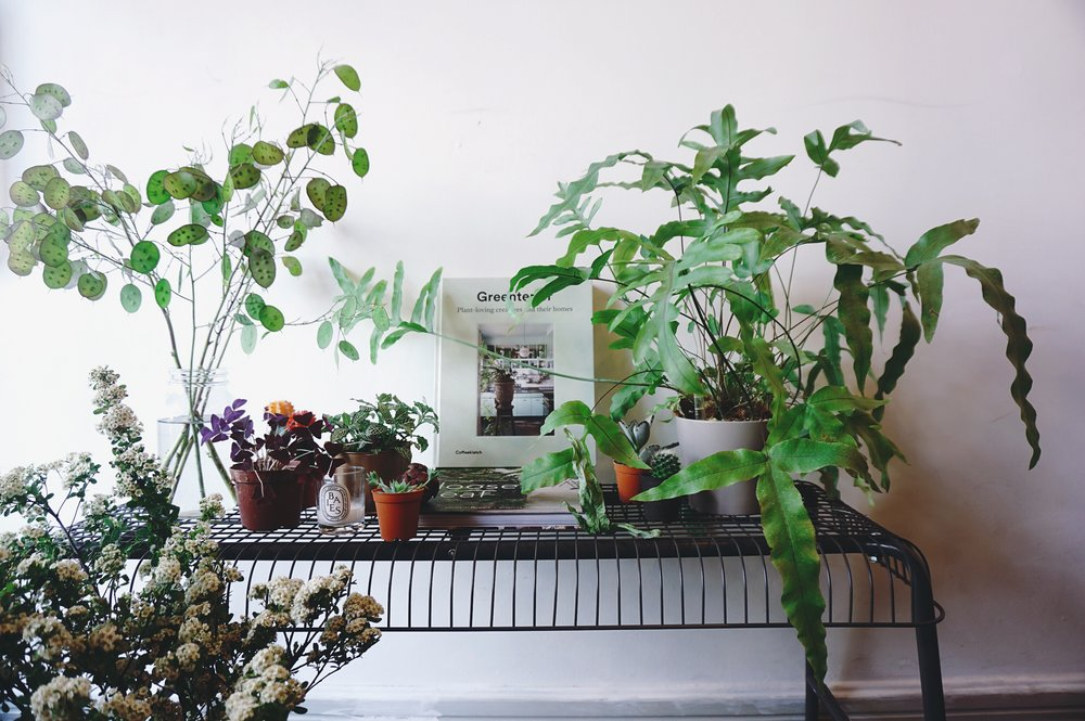 Plants and lifestyle - stop and admire some plants.