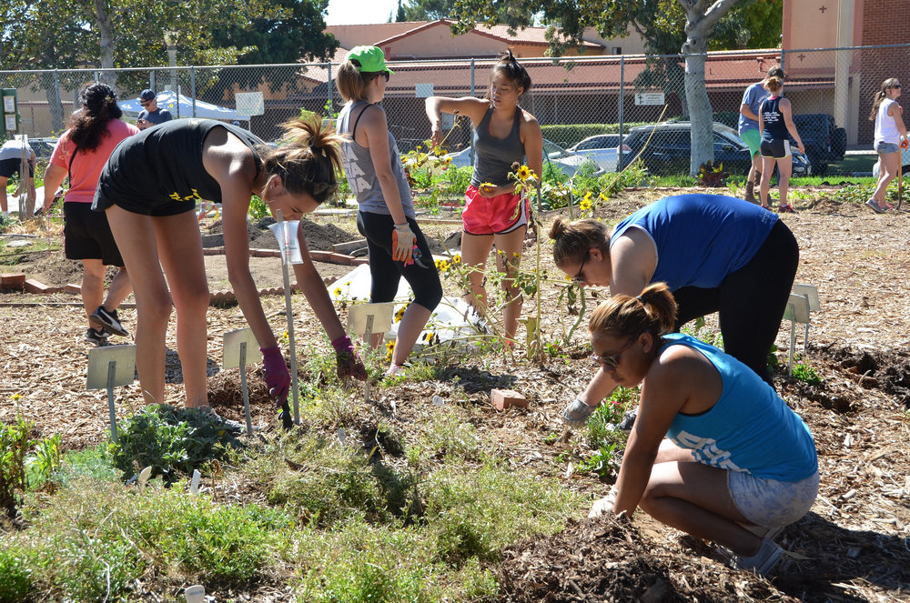 Build a garden. Grow a community. - The Emerson Avenue Community GardenWestchester, CA