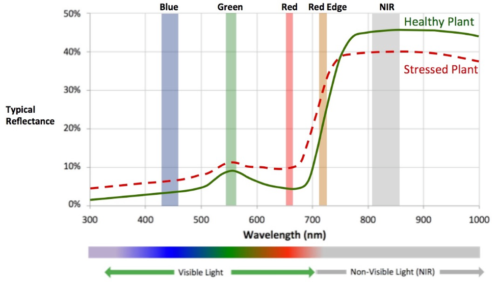 Figure 1: Typical reflectance of plants across the visible and non-visible light spectrum. Plants reflect a large amount of near-infrared light energy, which is invisible to the human eye but can be sensed by multispectral cameras.