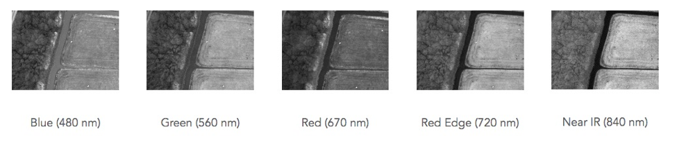 Figure 2: Example of images captured by professional multispectral camera for a single capture.