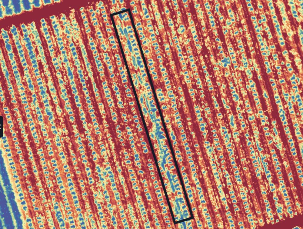 La capa de malezas de MicaSense le ayuda a identificar brotes de maleza en su cultivo