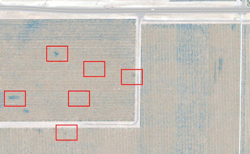 Y en la capa NDRE, las nuevas fugas son fáciles de detectar ya que no han tenido un impacto en la vegetación.