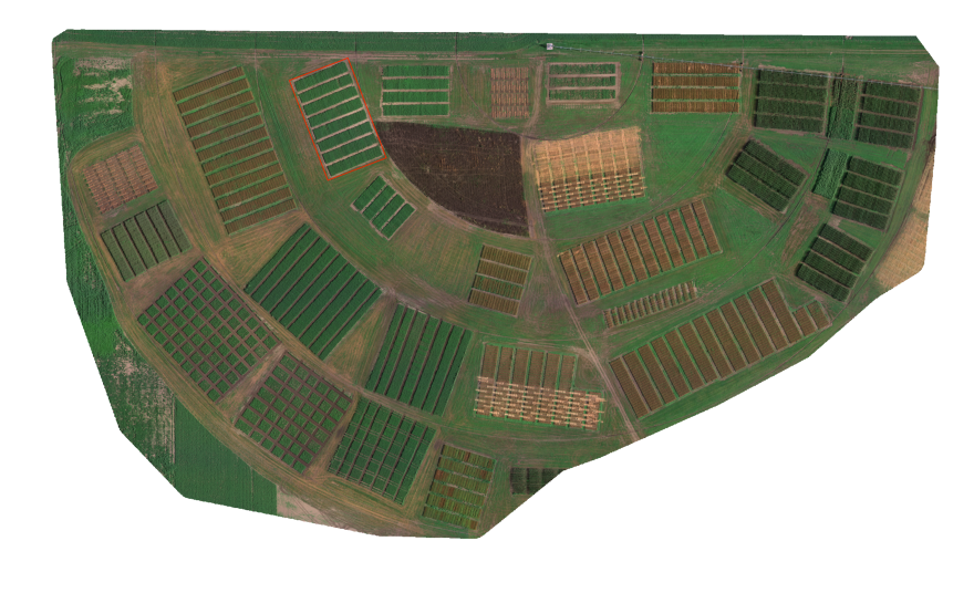 研究グループが殺菌剤処理の試験を行った区画のRGB画像(赤色の部分)