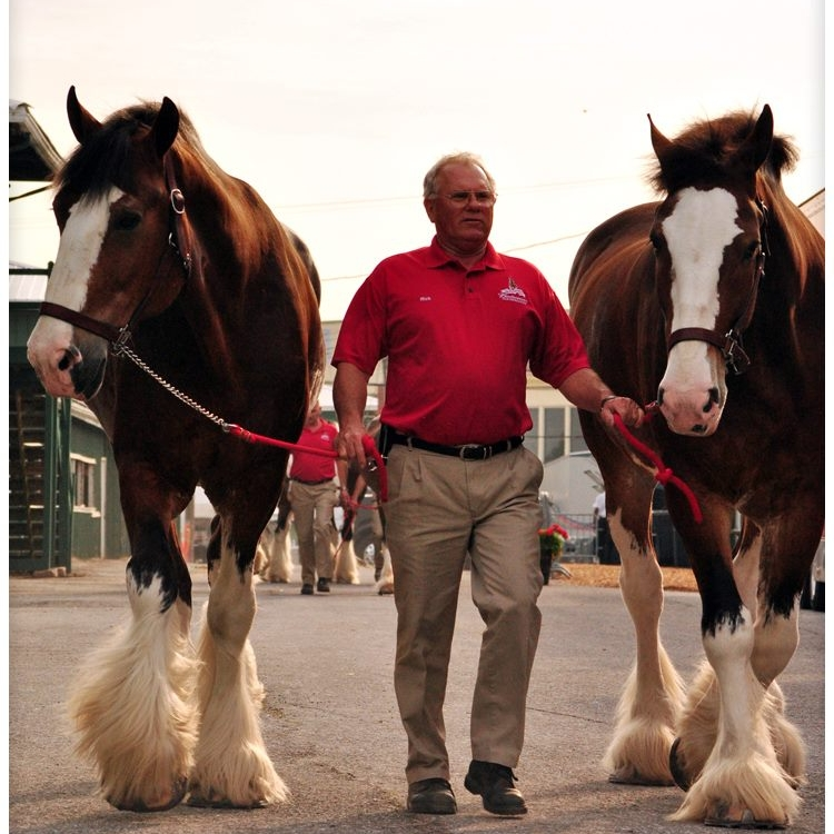 Upcoming events horses healing marylands military veterans meet and greet with the budweiser clydesdales m4hsunfo