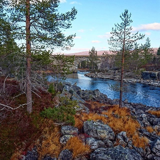 Just amazing🌲🍁 #iamnordic #norway #norge #nature #visitnorway #natur #norwegian #sky #landscape #bestofnorway #view #utpåtur  #tur #nordnorge #utsikt #trees #instagood #forest #naturelovers #outdoors #beauty #adventure #likeforfollow #river #hike #explore #bridge #autumn #autumnleaves #fallcolors