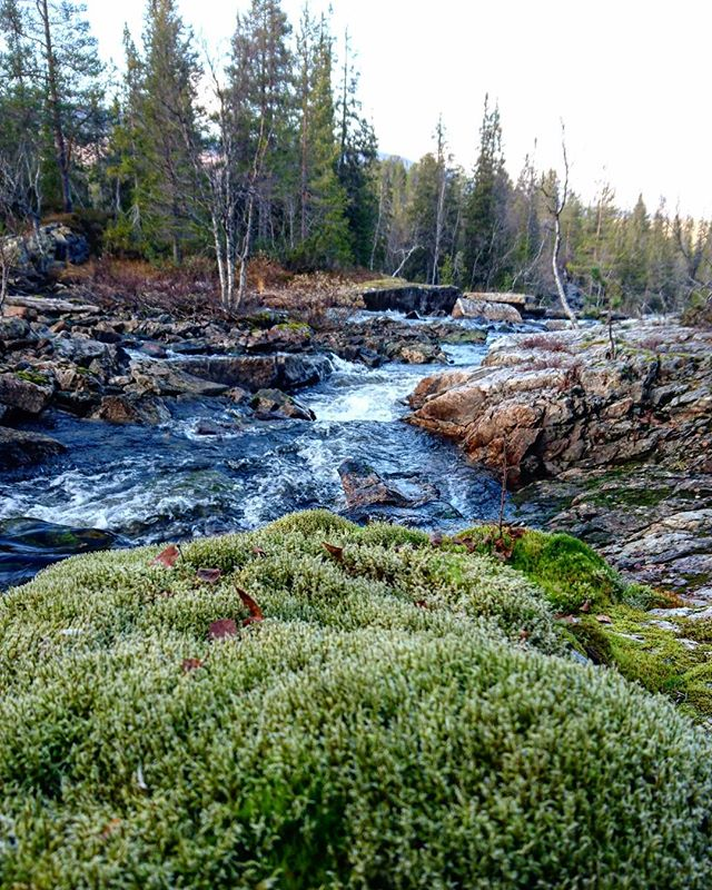 Majestic nature🌲🍃 #iamnordic #trollforest  #trollskogen #scandinavia #norway #nature #nordic #norge #landscape #visitnorway #water #instatravel #forest #view #river #beautiful #outdoors #adventure #instagood #picoftheday #hiking #troll #trolls #woods #naturelovers #waterfall #autumn #natur #skog #likeforfollow