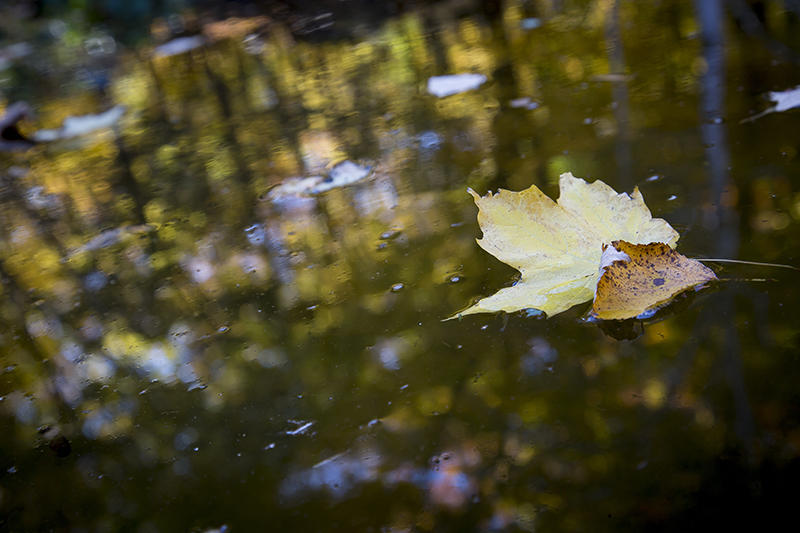 minnesota-landscape-arboretum-fall-leaves-color-melanie-mahonen-photography