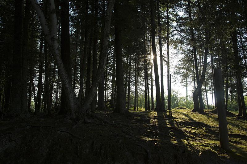 magic-light-woods-melanie-mahonen-photography
