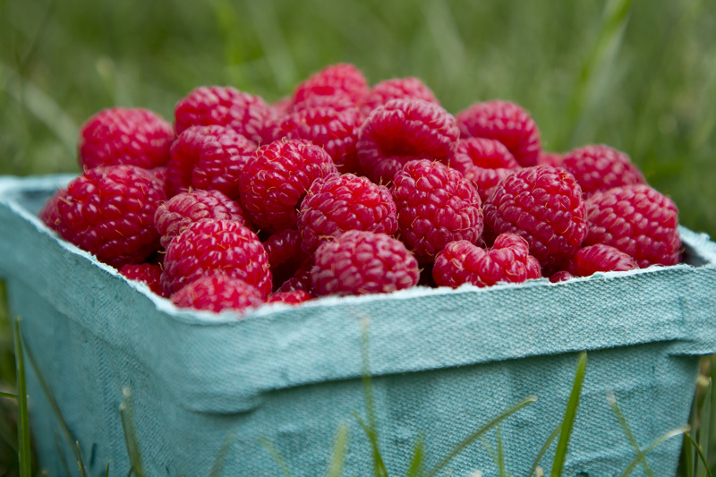01-food-photography-natural-light-summer-raspberries-melanie-mahonen