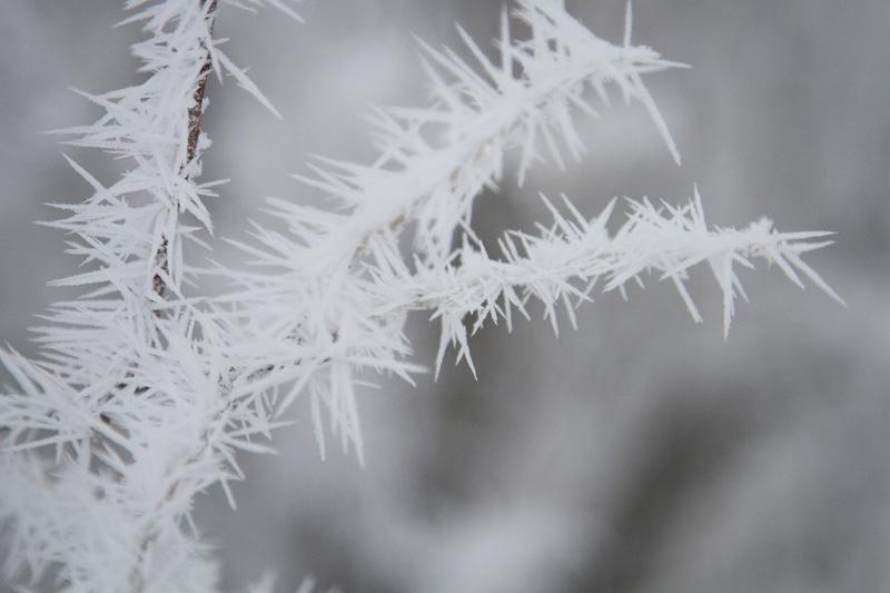 02-frosty-twigs-melanie-mahonen-photography