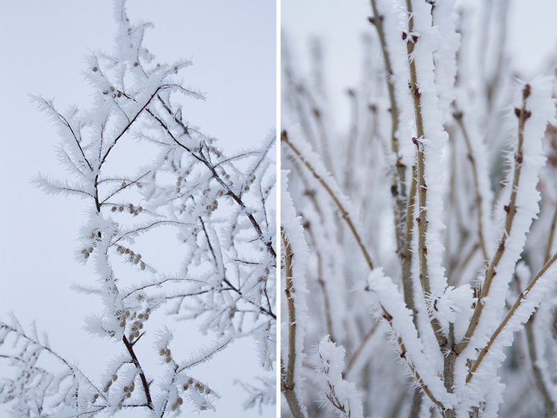 03-frosty-twigs-melanie-mahonen-photography