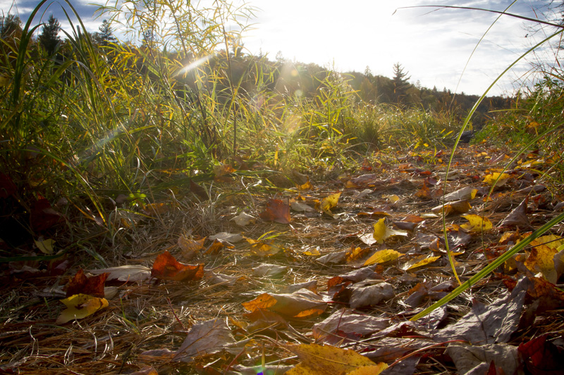 04-fall-hiking-trail-leaves-colors-jay-cooke-state-park-north-shore-minnesota-melanie-mahonen-photography