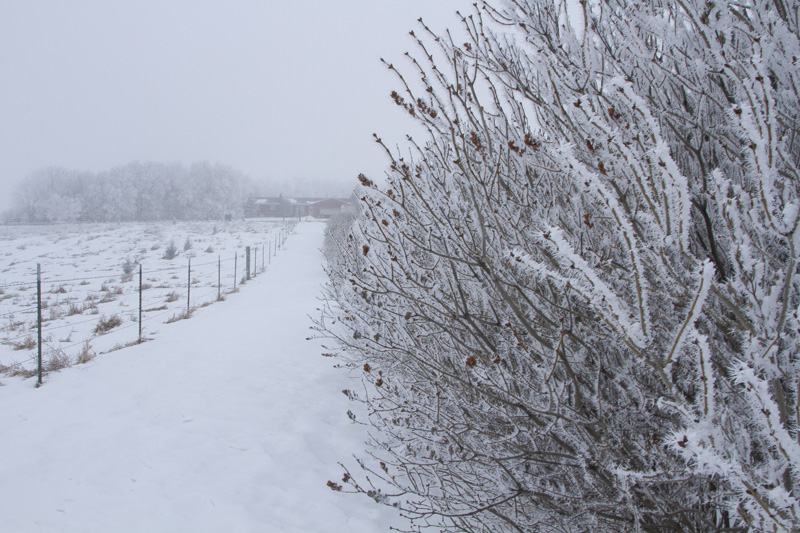 04-north-dakota-plains-frosty-bushes-melanie-mahonen-photography