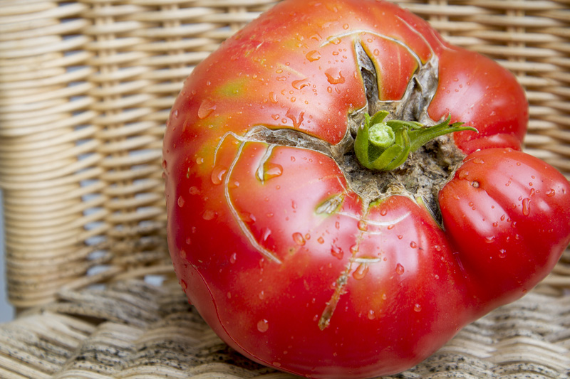 05-natural-light-food-photography-heirloom-tomato-vistory-backyard-garden-homegrown-melanie-mahonen-photography
