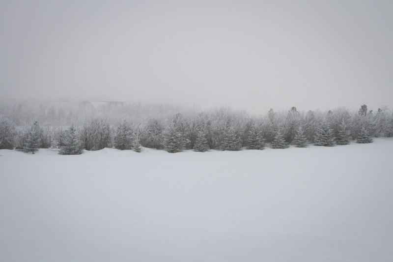 06-north-dakota-frosty-trees-melanie-mahonen-photography