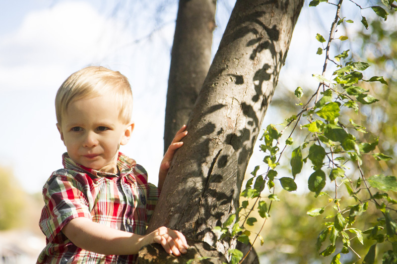 08-tree-climbing-boys-melanie-mahonen-photography