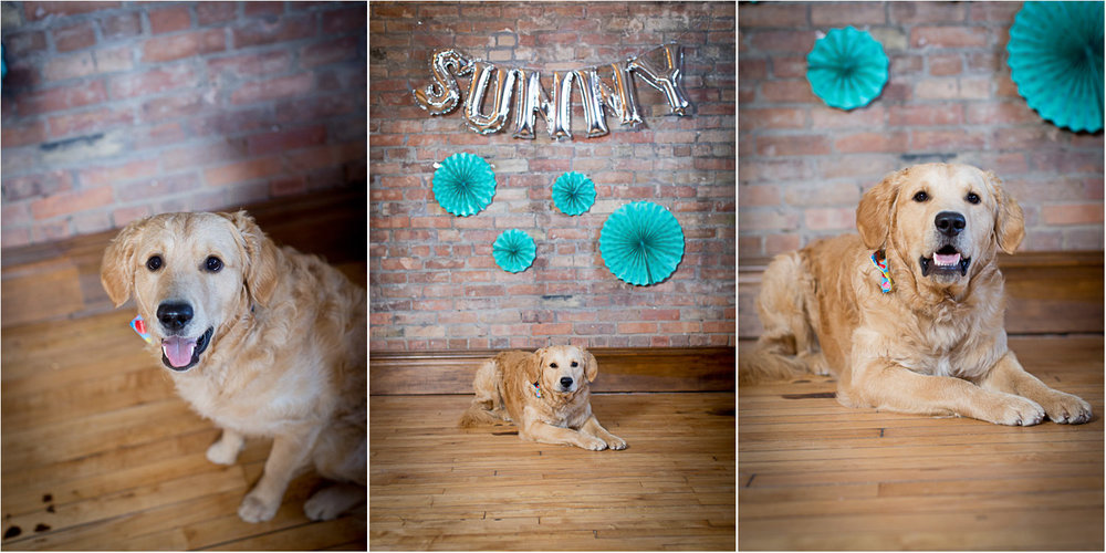02-golden-retriever-mn-dog-pet-photographer-first-birthday-studio-happy-pup-silver-balloon-letters-sunny-mahonen-photography.jpg