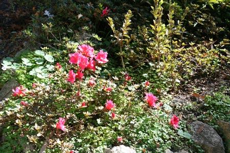 Kim Weston - Bodie House Garden