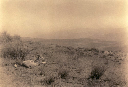 Edward Weston Landscape circa 1907