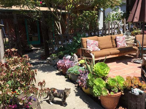 Kim Weston - Wildcat Hill Courtyard
