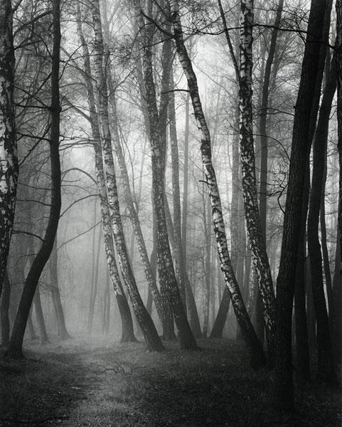 Roman Loranc - Trees - www.romanloranc.com